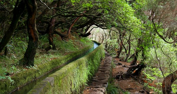 madeira island walks